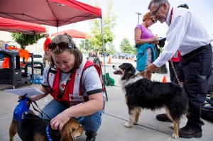 "Tuesday, September 17, 2013. Red Cross shelter at Timberline Church, Fort Collins, Colorado. Red Cross workers, Jody Weyers, of Green Bay, Wisconsin petting ""Ella Beagle"" and Larry Fortmuller, of Santa Ana, California holding ""Bailey"" while their owner, Jennifer Morgan, of Drake Colorado, fills out paper work after being airlifted from Storm Mountain by helicopter. .Photo by Hector Emanuel/American Red Cross"