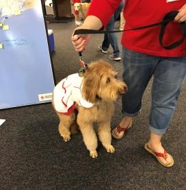 Houston dog visit 2 (2).jpg